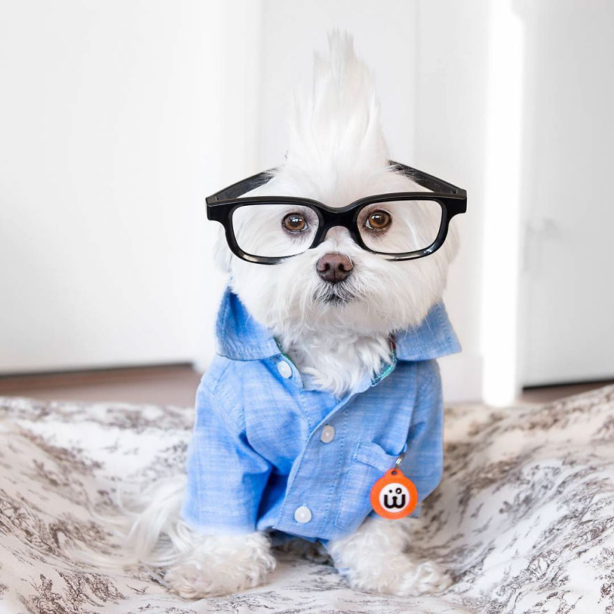 Meet Toby Littledude - Instagram's Most Adorable Hipster Pup!