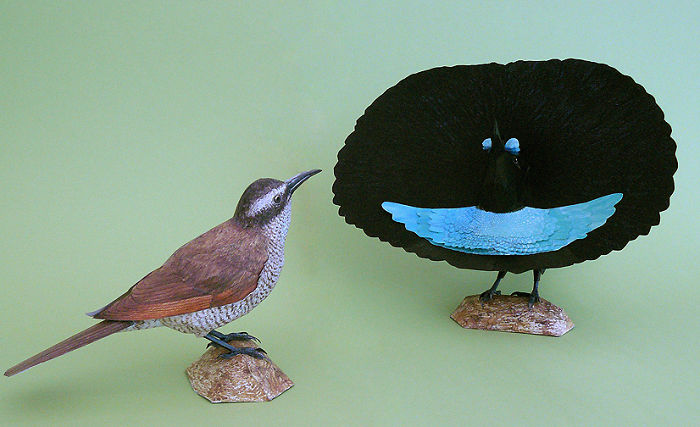 I Create Realistic Birds From Paper Bored Panda