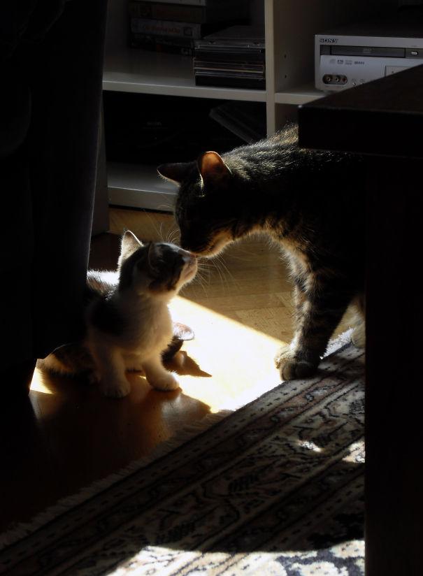 Smitten As A Kitten