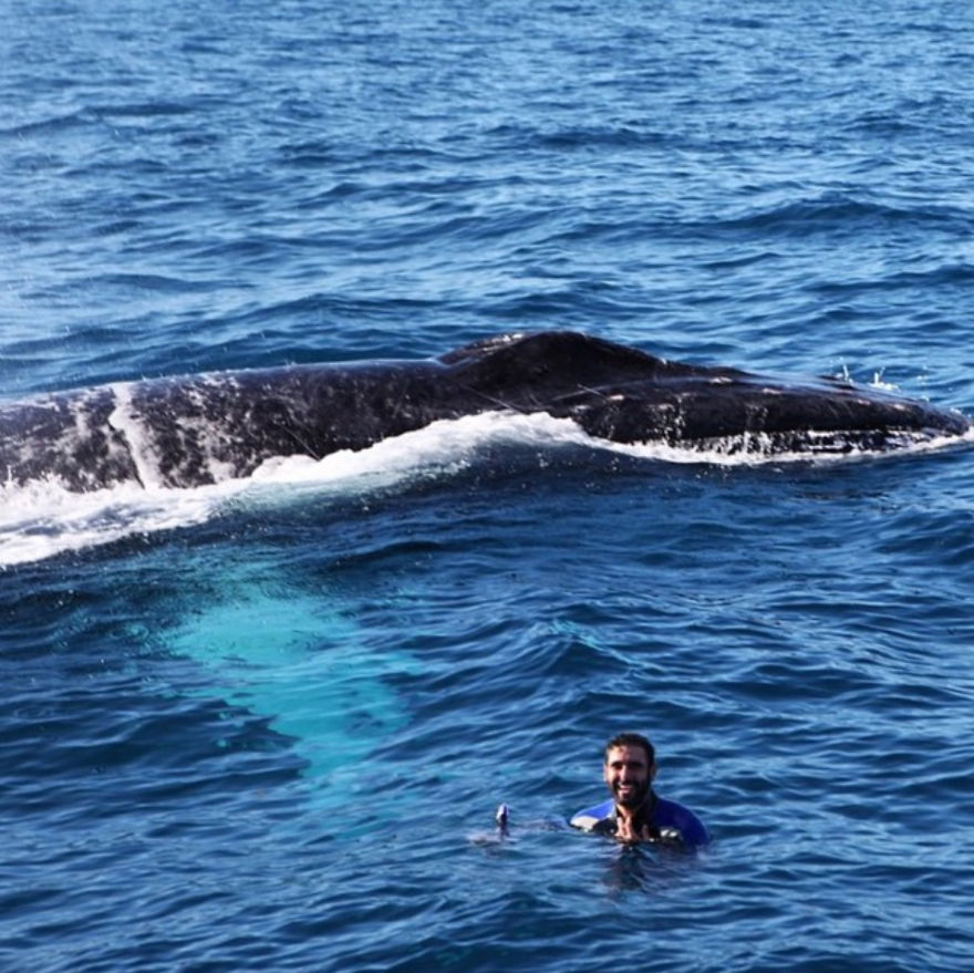 Humpback Whale Pops Up Behind Me In Dominican Republic