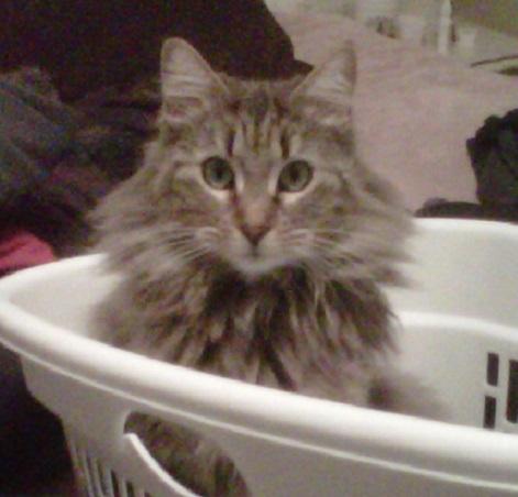 Sophia-still-in-the-laundry-Copy-Copy.jpg