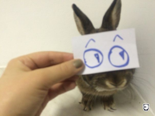 I Am A Rabbit Busia