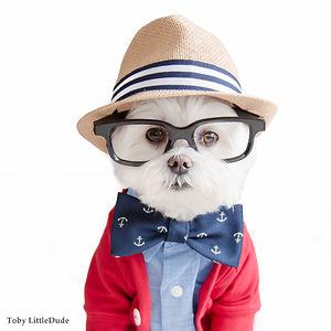 Toby LittleDude