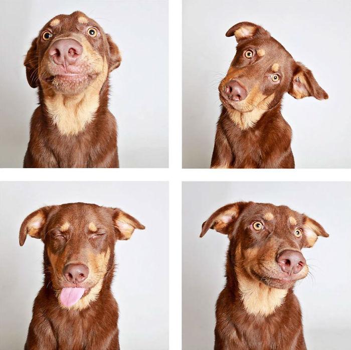 Jax - Adopted