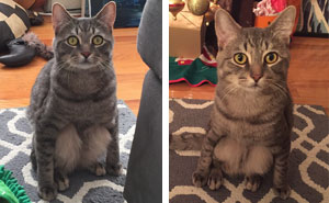 Couple Adopts A Stray Cat And Finds He's Not Like The Other Cats