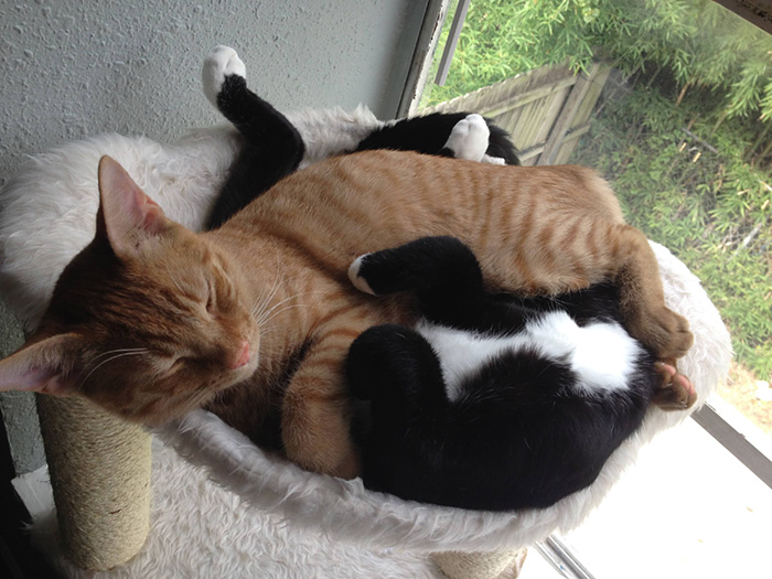 adopted-cats-sleeping-together-hammock-barnaby-stoche-10