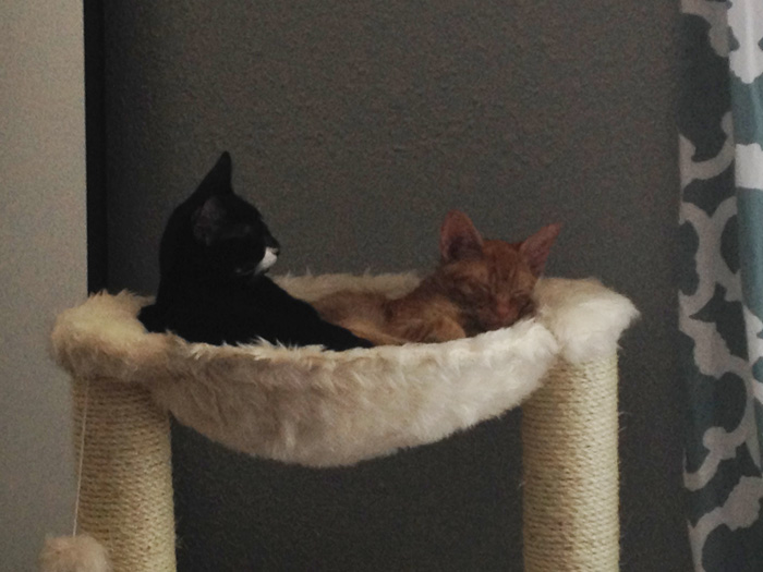 adopted-cats-sleeping-together-hammock-barnaby-stoche-14