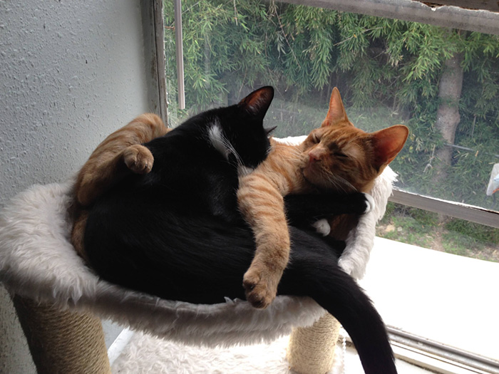 adopted-cats-sleeping-together-hammock-barnaby-stoche-18
