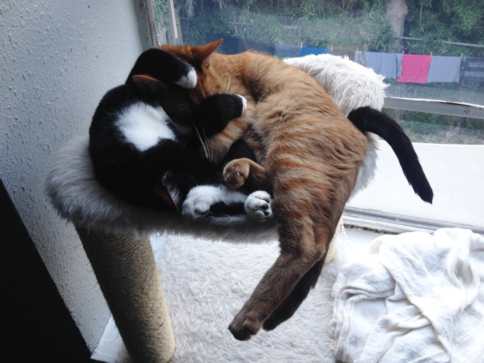adopted-cats-sleeping-together-hammock-barnaby-stoche-19