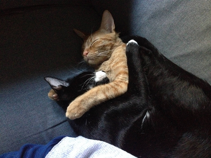 adopted-cats-sleeping-together-hammock-barnaby-stoche-2