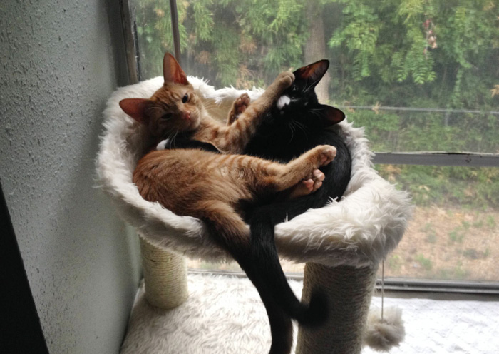 adopted-cats-sleeping-together-hammock-barnaby-stoche-20