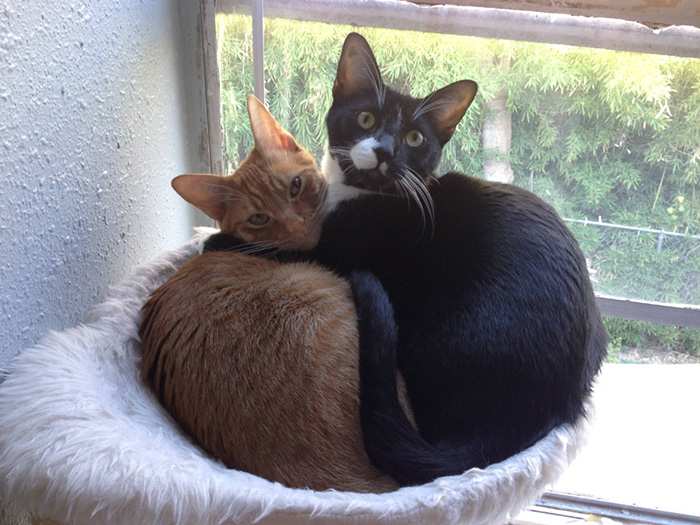 adopted-cats-sleeping-together-hammock-barnaby-stoche-4