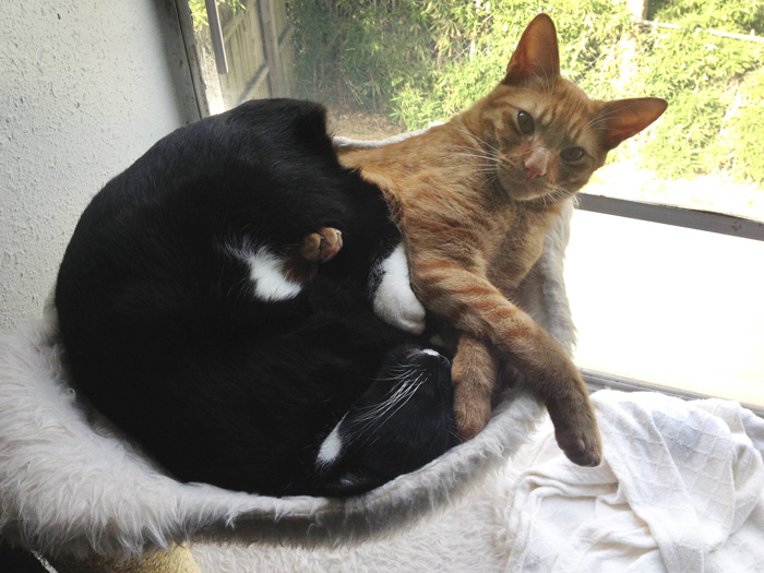 adopted-cats-sleeping-together-hammock-barnaby-stoche-5