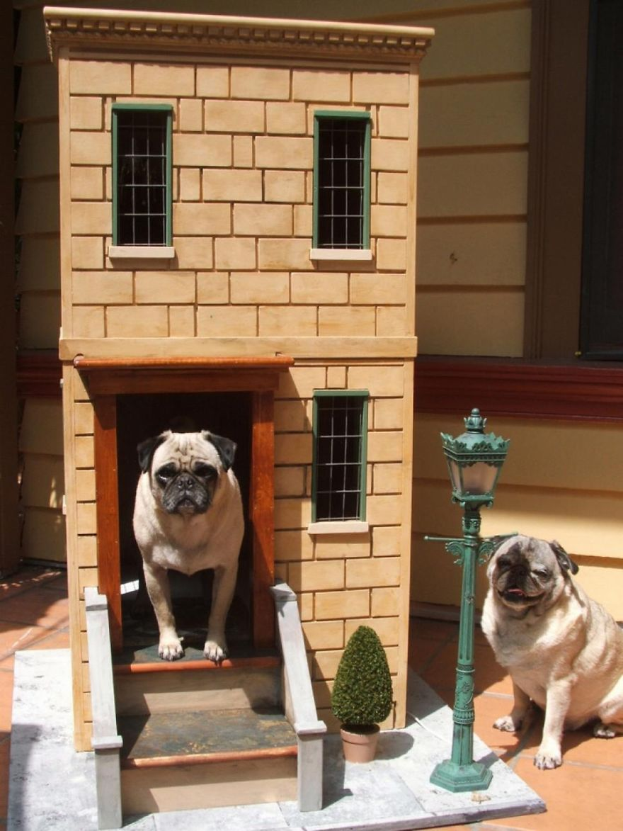Pug's Castle