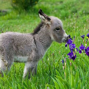 Sweet-smelling Flowers And An Even Sweeter Donkey.