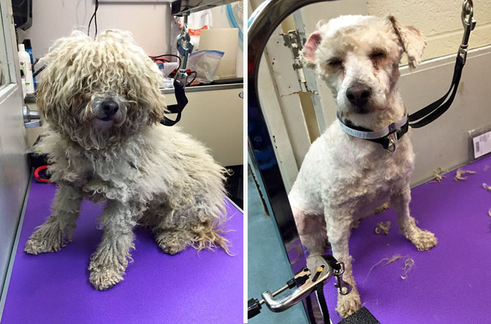 barber-gives-free-haircuts-shelter-dogs-mark-imhof-47