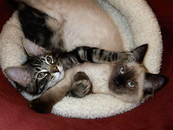 Furry Feline Friendship