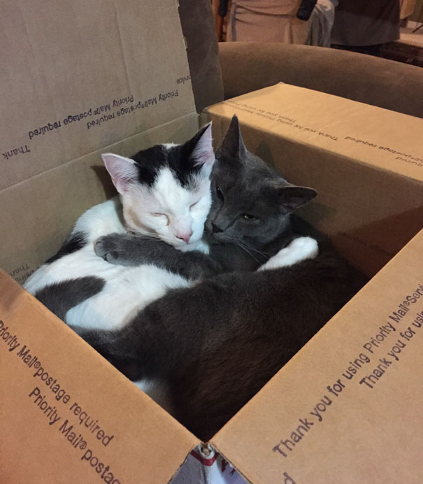 This box was never so comfortable without you