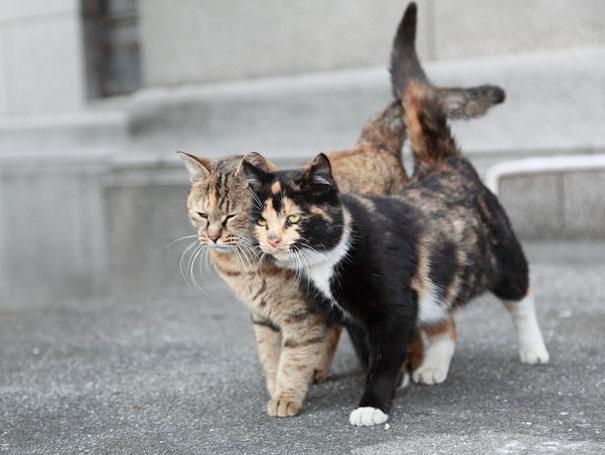 Loving couples walk in steps