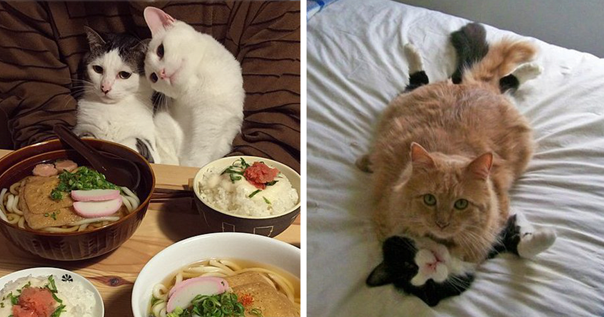 114 Cats Ready For Valentine's Day