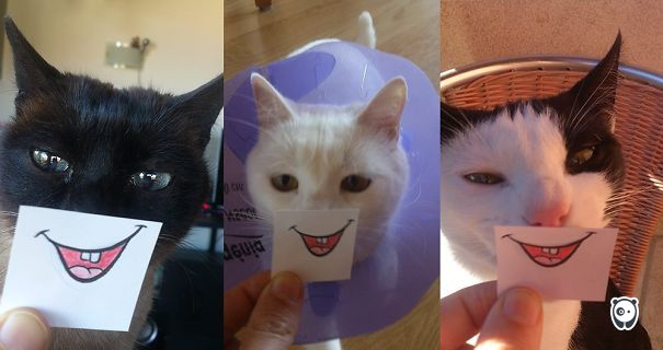 Smile My Cats :)