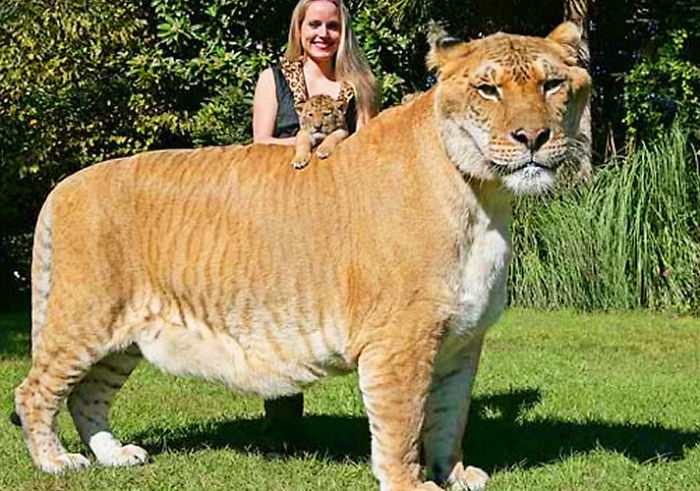 Coolest Animal Cross Breeds