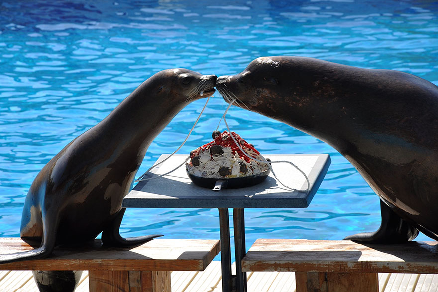 Sealion Romance