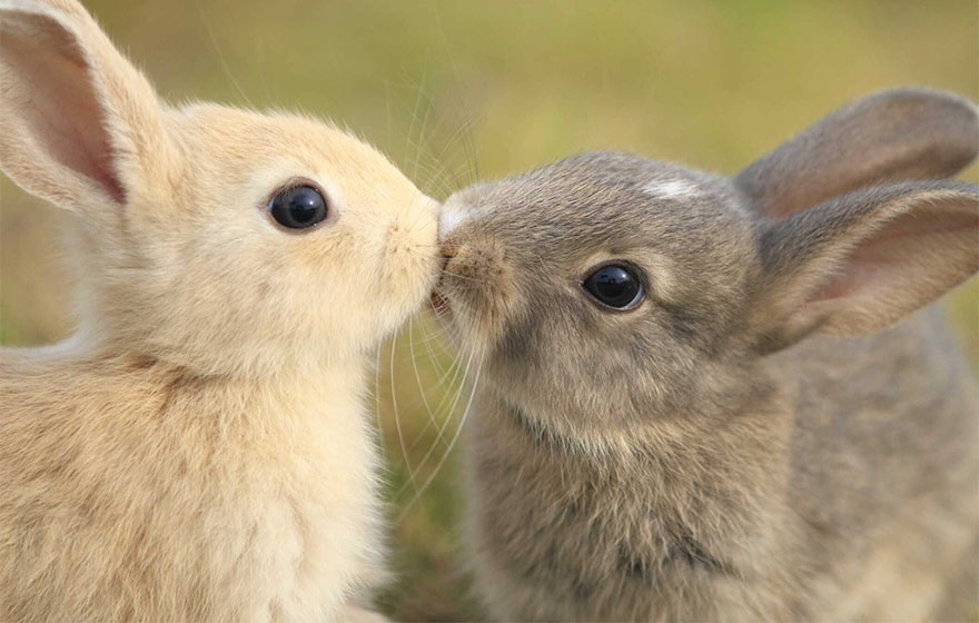 76 Kissing Animals Prove That Kisses Aren T Just For People Bored