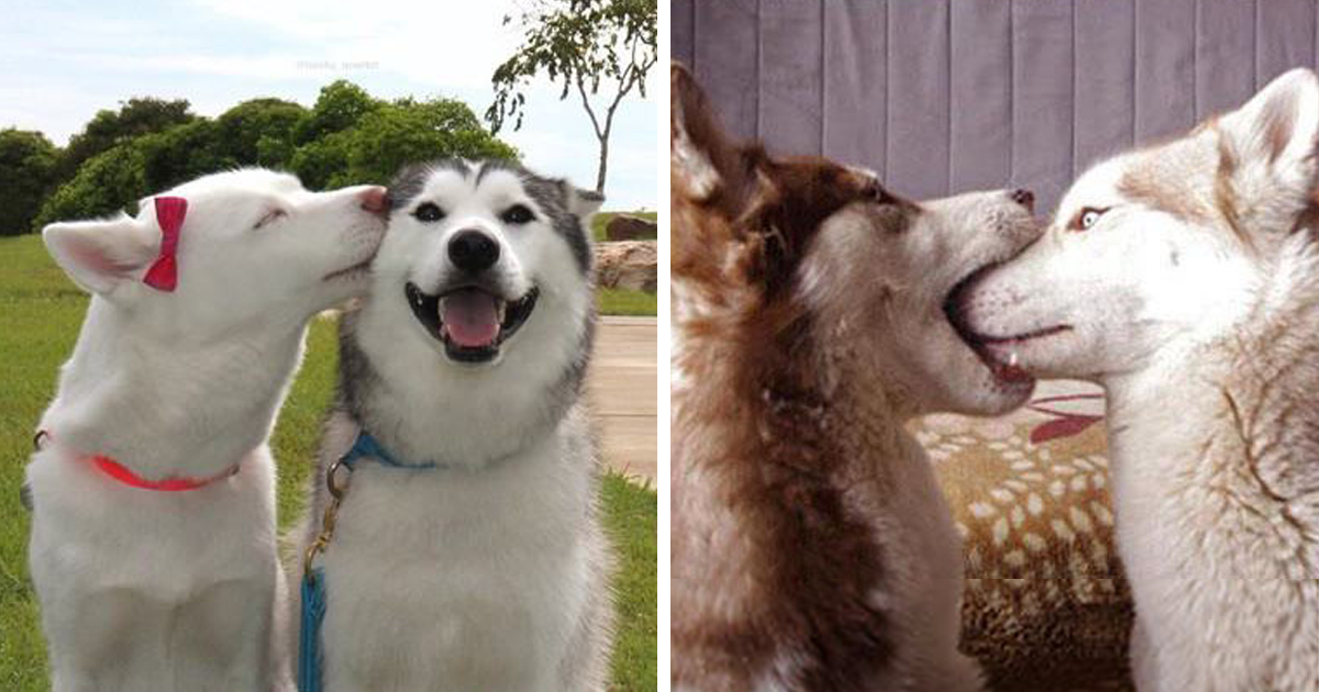 14  kissing animals prove that kisses aren u2019t just for people