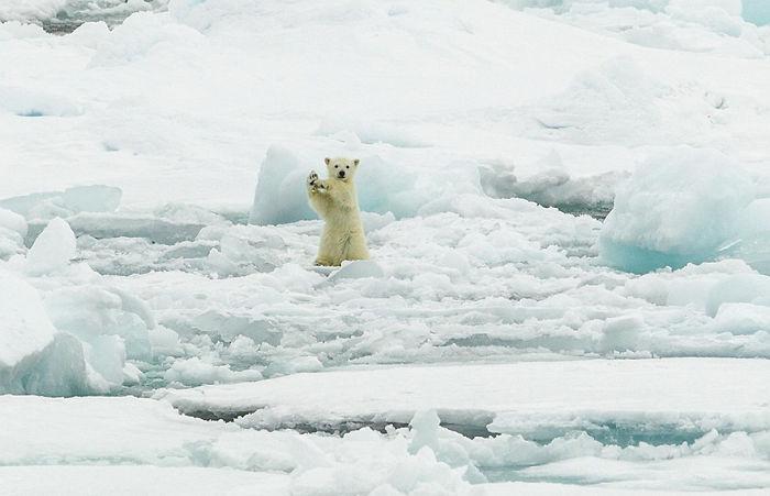 Arctic Hi Five