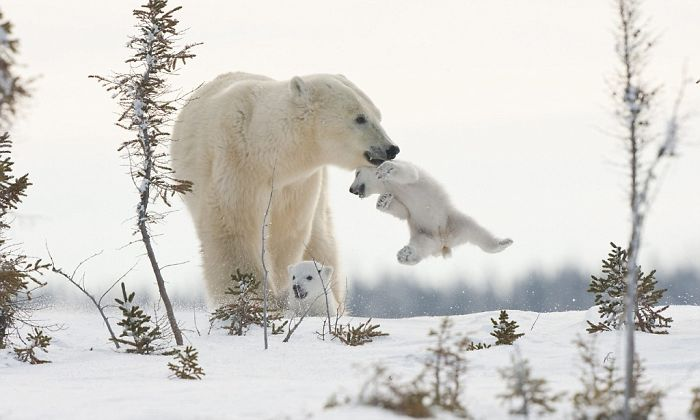 Mom, Put Me Down!