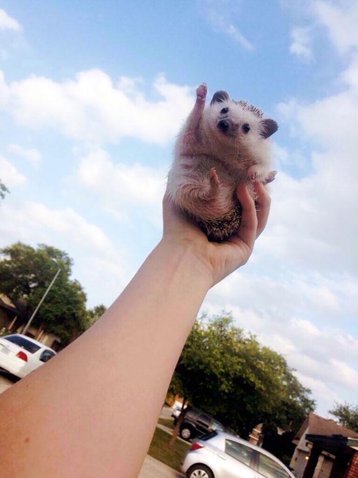 Hedgehog To The Sky!