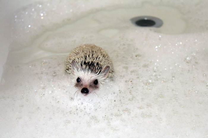 My Hedgehog Is Cuter Than Your Honor Student