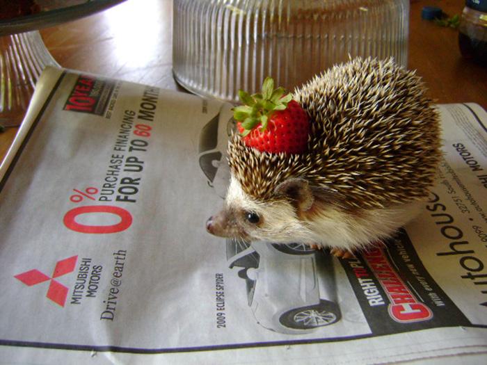 A Hedgehog With A Strawberry On Its Head
