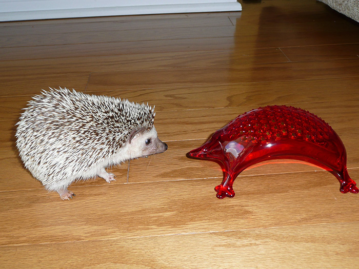 Here's My Hedgehog With A Cheese Grater
