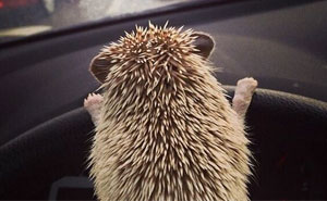 20+ Adorable Pics To Celebrate Hedgehog Day