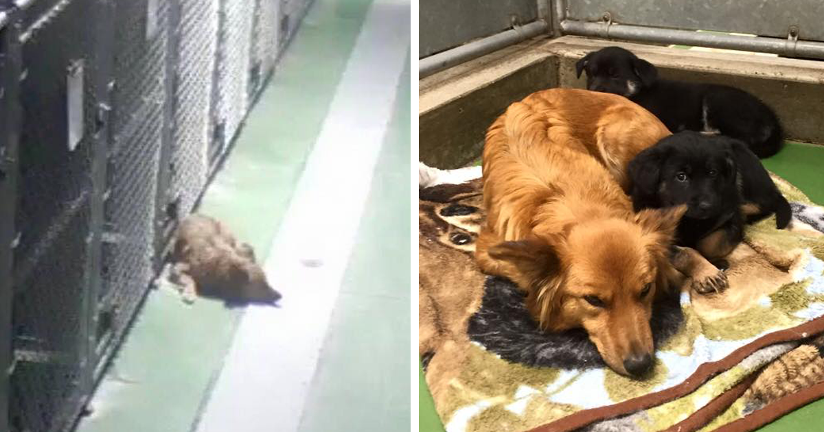 Dog Breaks Out Of Kennel To Comfort Abandoned Crying Puppies - Dog escapes from kennel to comfort abandoned crying puppies