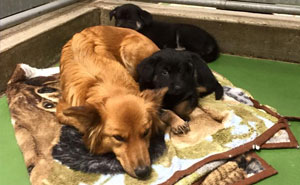 Dog Breaks Out Of Kennel To Comfort Abandoned Crying Puppies