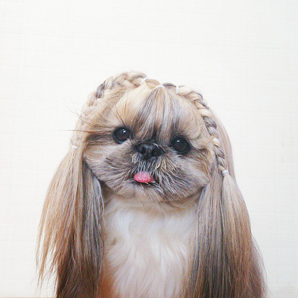 Every Day This Dog Gets A New Hairstyle Bored Panda