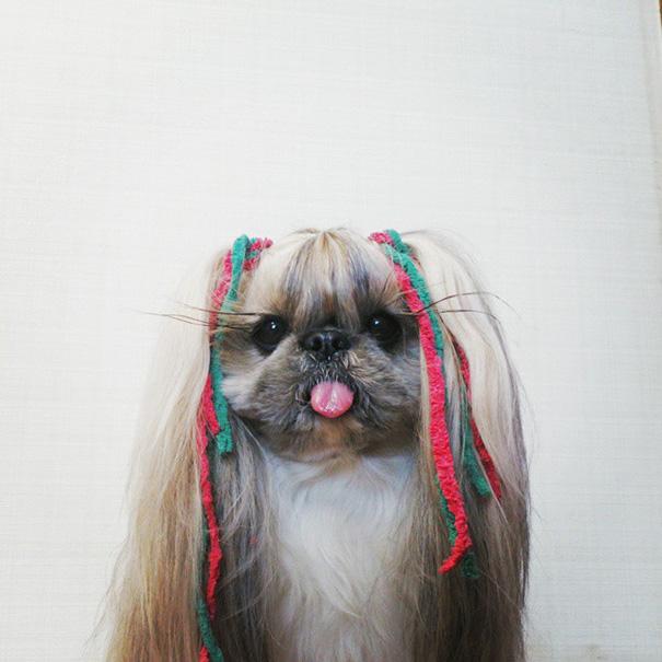 Hairstyle Dog