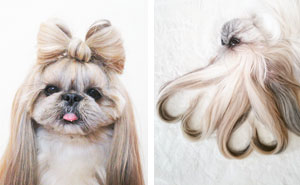 Every Day This Dog Gets A New Hairstyle