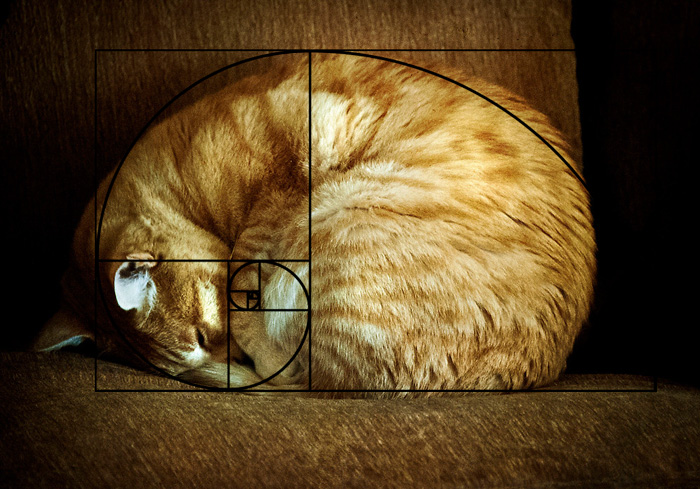 Fibonacci's Cat