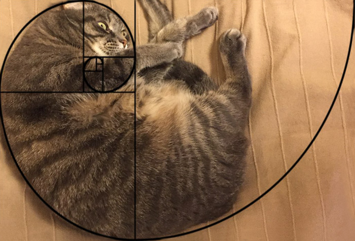 Furbonacci Sequence Proves That Cats Are Purrfect (20 Pics)