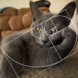 Furbonacci Sequence Proves That Cats Are Purrfect (10+ Pics)