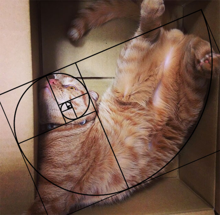 When He Is Nervous He Plays Dead In A Box