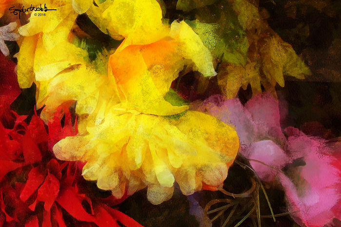 Flower Photography As An Entry Into The Transcendent
