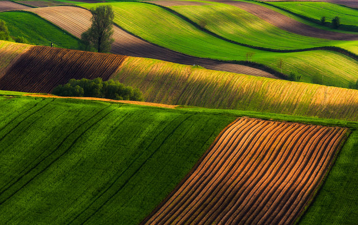 For 20 Years I've Been Photographing European Fields, Which Look Like Sea Waves