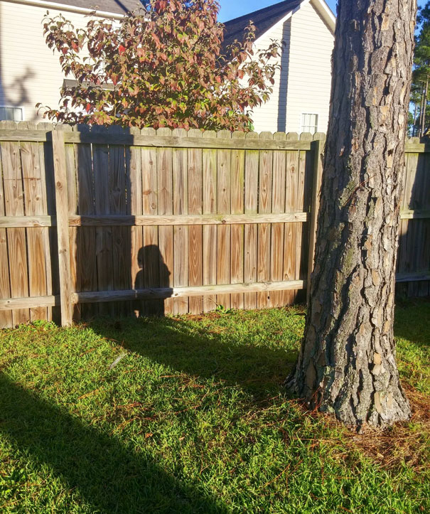 My Son, The 3-Year-Old Hide And Seek Master
