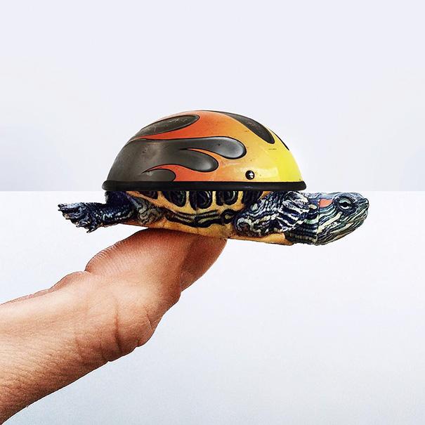 Helmet + Turtle