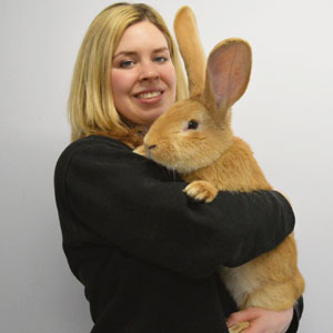 This Adorable Dog-Sized Rescue Rabbit Is Looking For A New Home